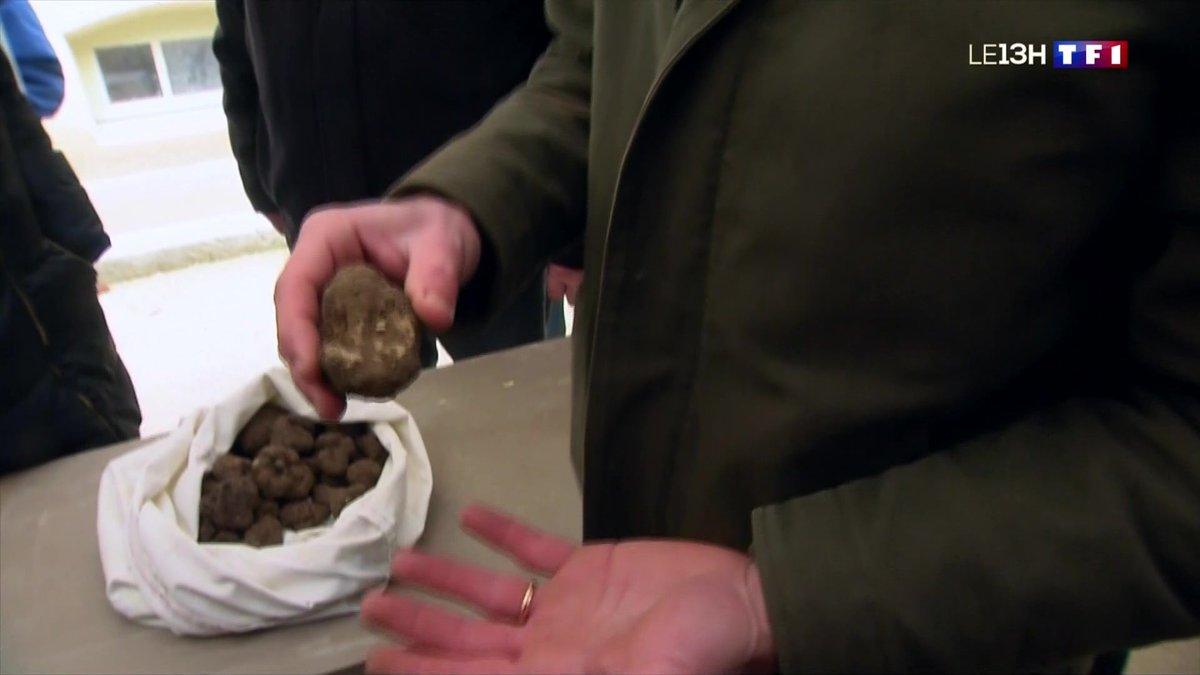 Coup d'envoi du marché aux truffes de Carpentras - TF1