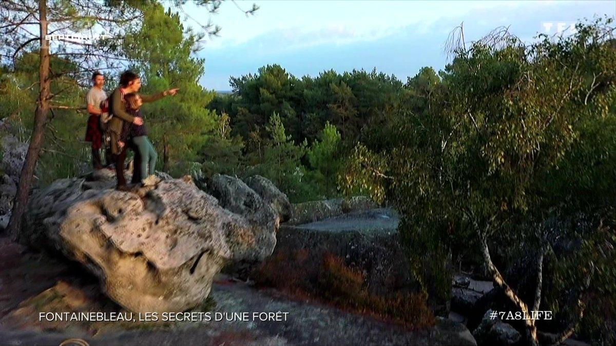 Les secrets de Fontainebleau, la forêt la plus visitée de France - TF1