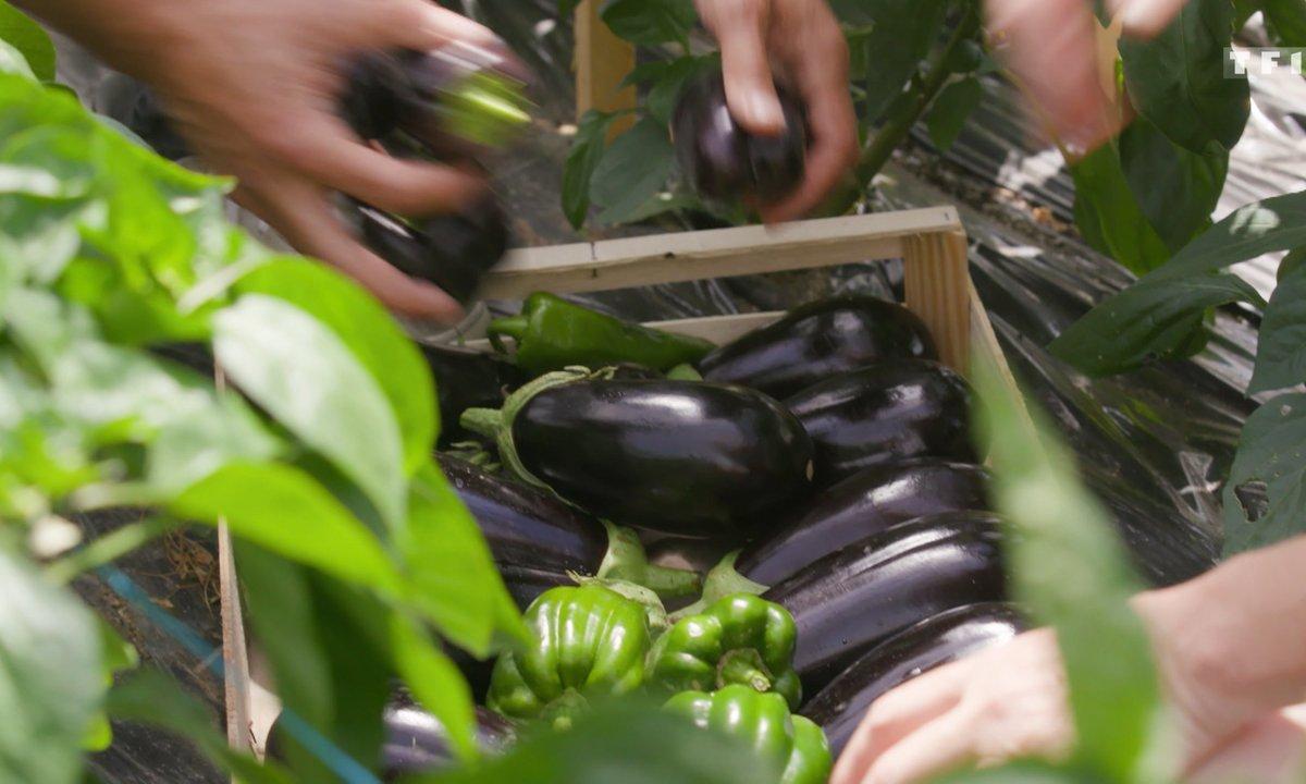 Petits plats en équilibre : sur la route des vacances - Aubergines
