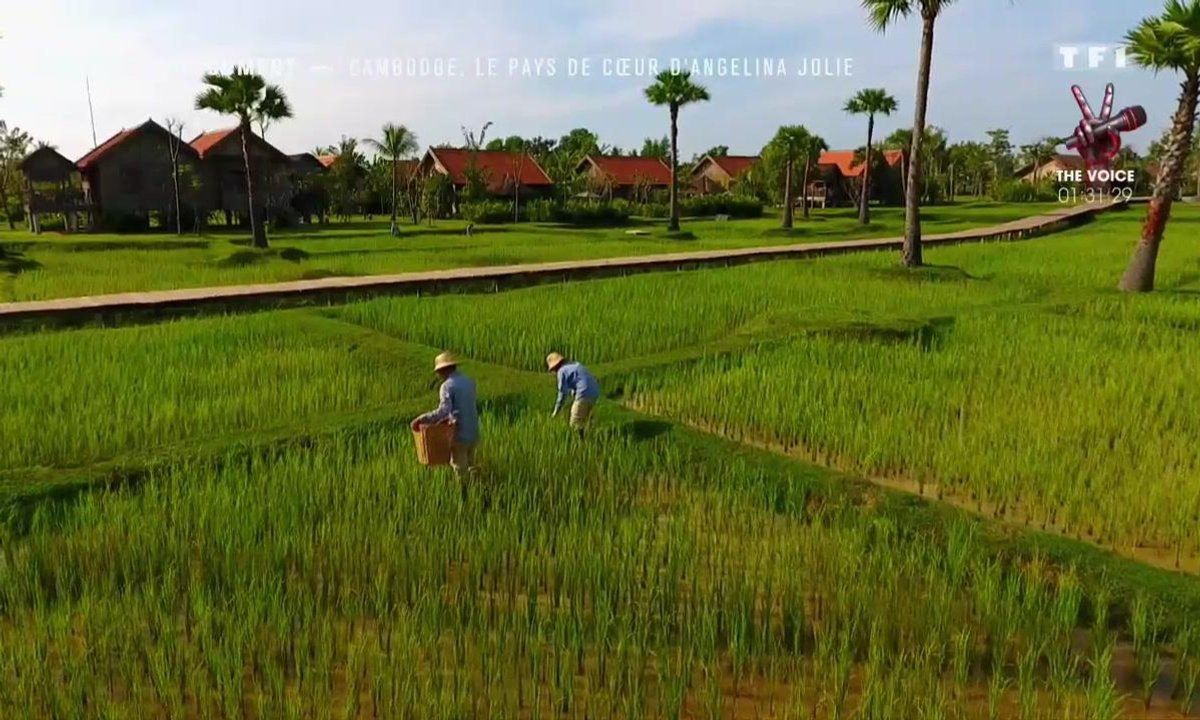Direction le Cambodge, pays de cœur d'Angelina Jolie