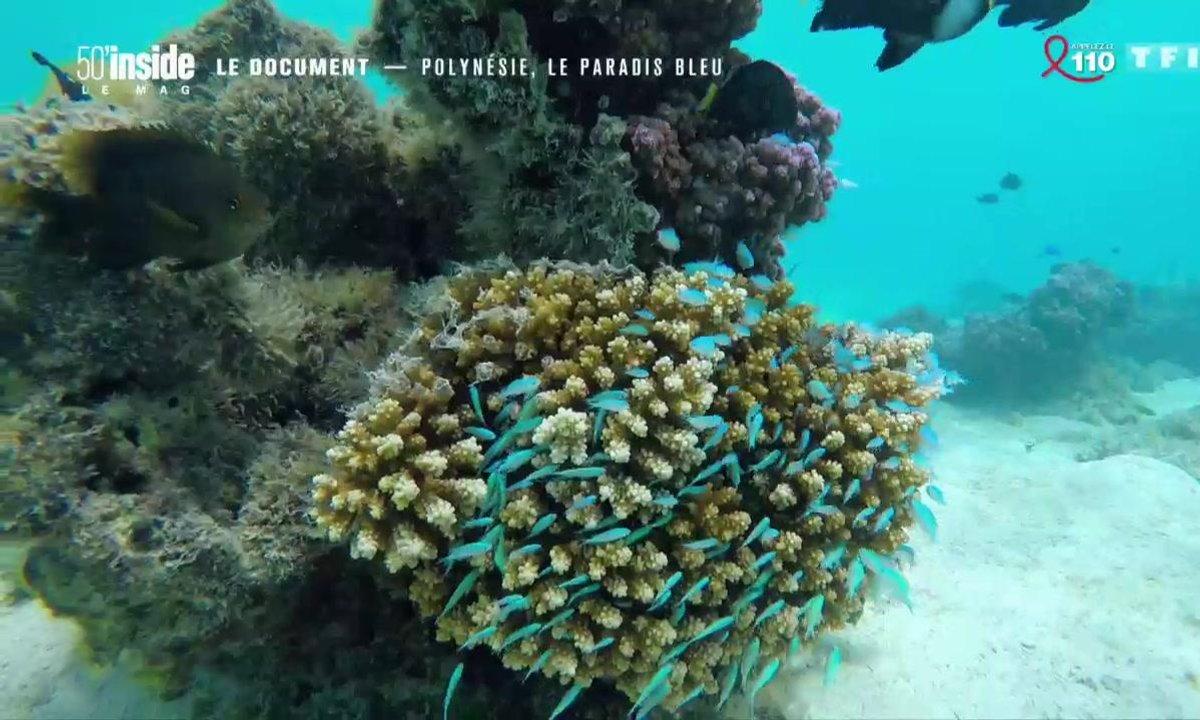 Le document - La Polynésie, un paradis bleu pour les amoureux