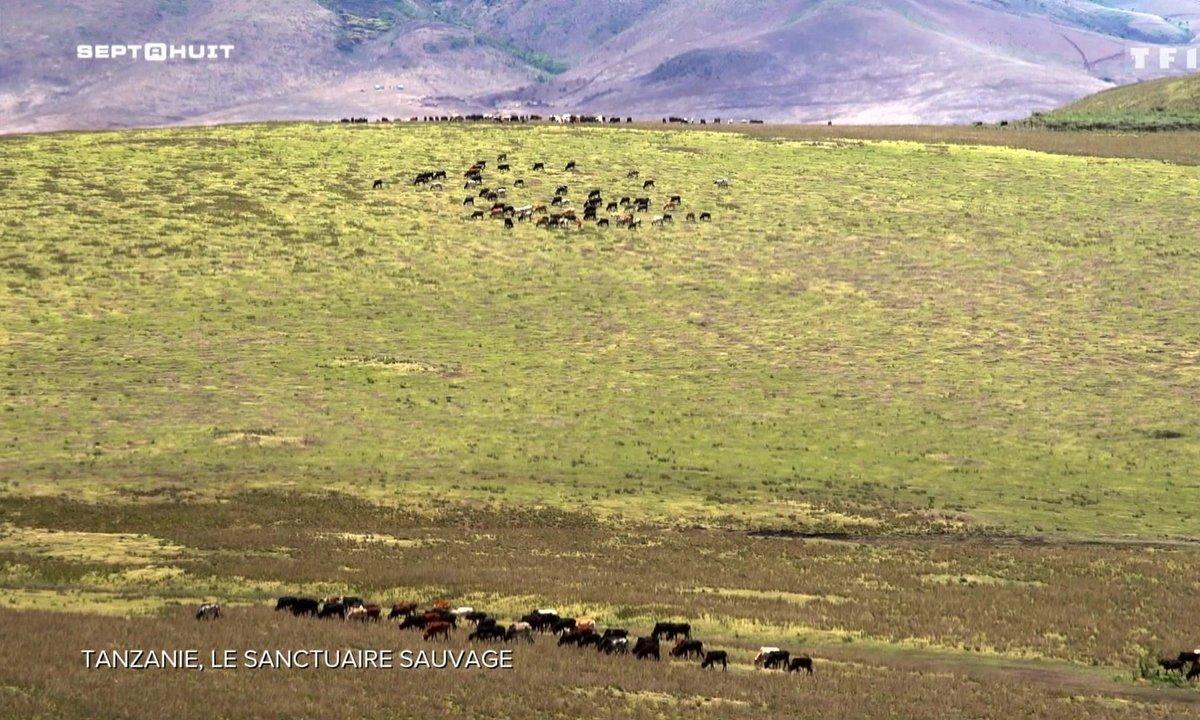 À la découverte du parc naturel de Ngorongoro en Tanzanie