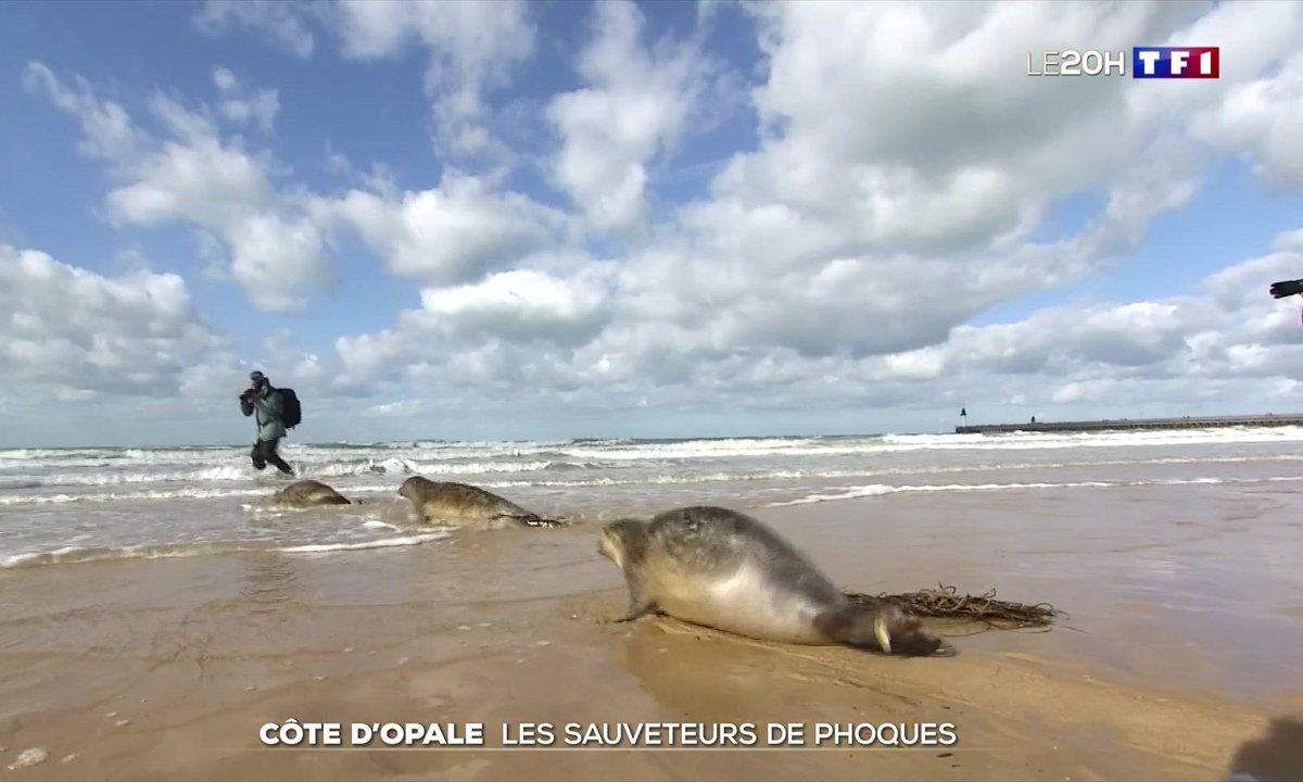 À la rencontre des sauveteurs de phoques sur la Côte d'Opale