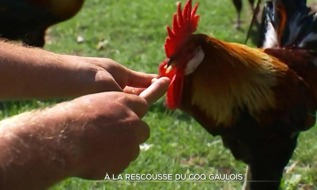 À la rescousse du coq gaulois