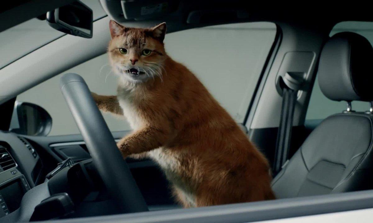 Insolite : Volkswagen craque pour les chats dans une publicité