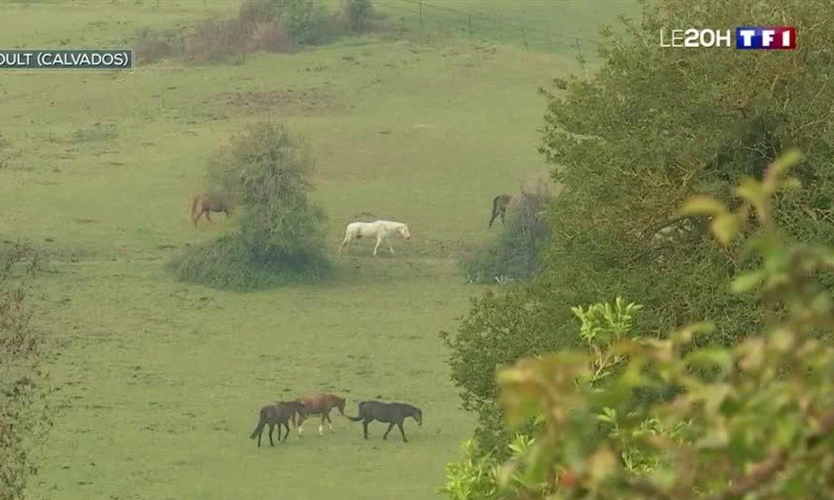 Bien-être des chevaux : une écurie pas comme les autres en Normandie