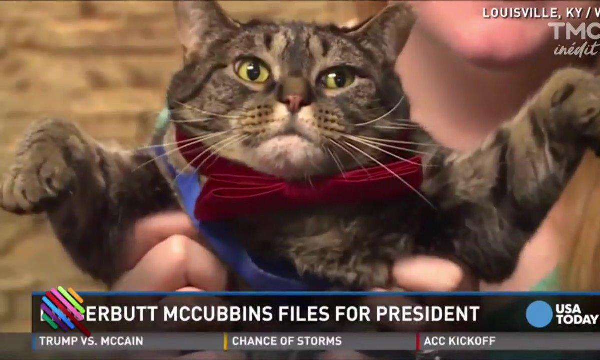 """Limberbutt McCubbins : un candidat """"demo-cat"""""""