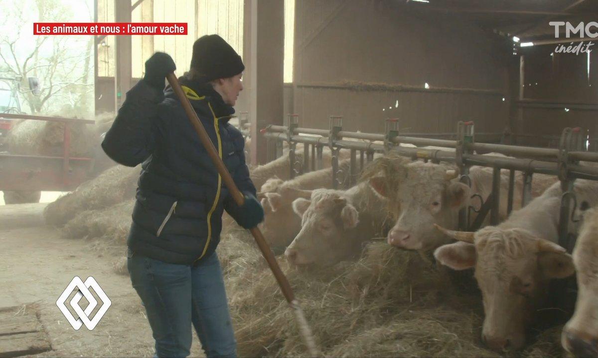 """Émilie, éleveuse de bovins : """"Il faut sacrément les aimer pour faire tout ce qu'on fait"""""""