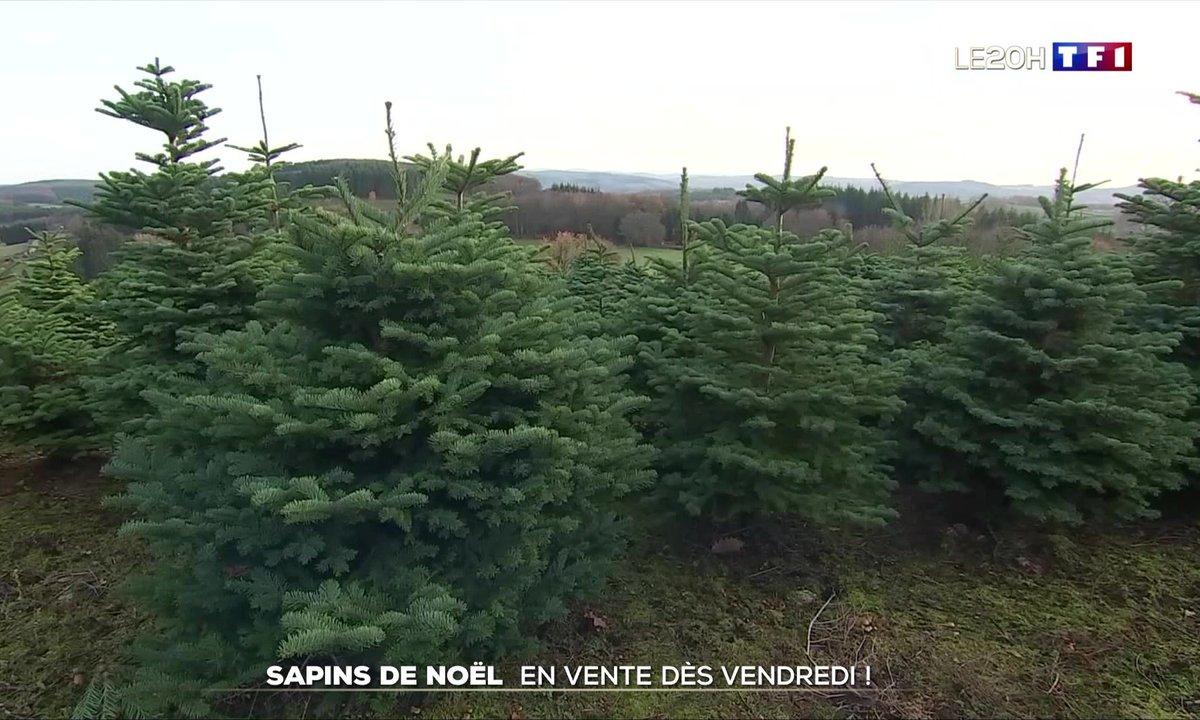 Fêtes de fin d'année : les sapins de Noël en vente dès vendredi !