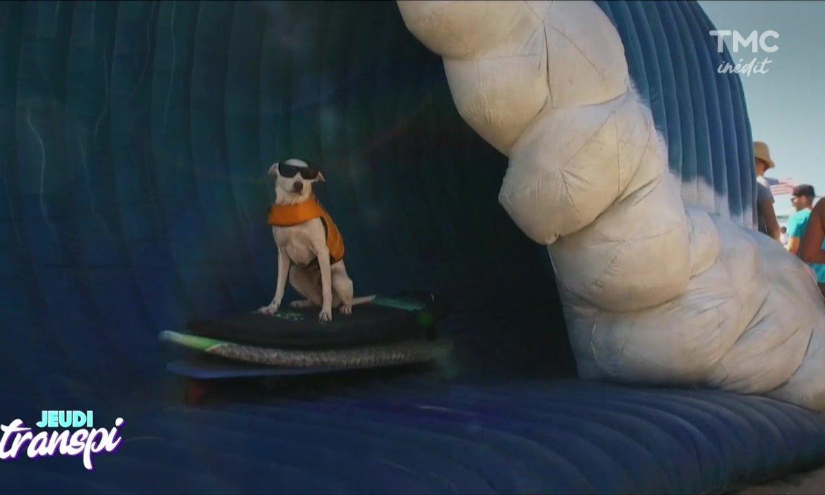 Jeudi Transpi : Surf avec ton chien