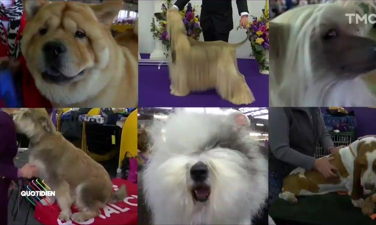 L'image du jour d'Etienne Carbonnier : Mystère autour des concours de beauté pour chiens