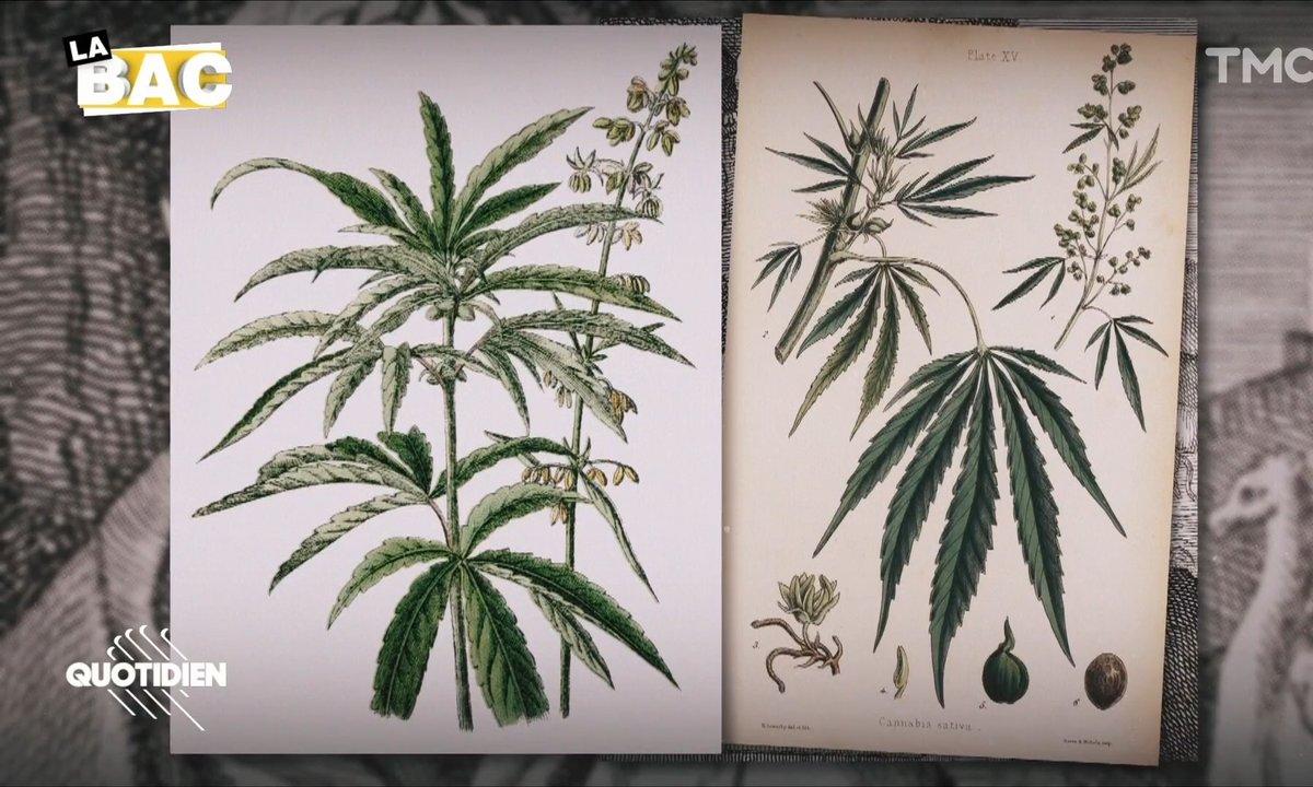 La BAC : la drogue et la Culture, une affaire millénaire