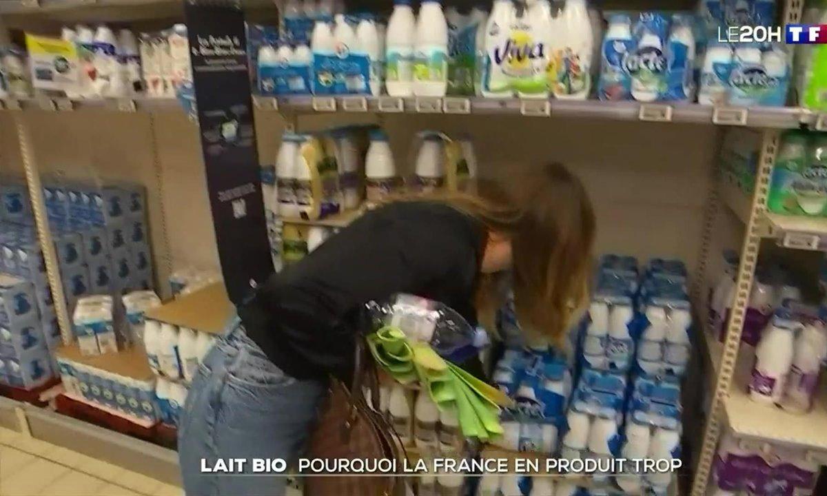 Lait bio : pourquoi la France en produit trop