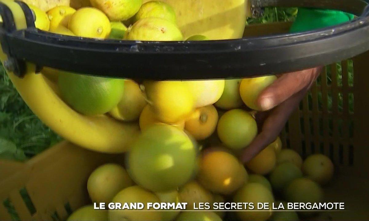 Le grand format : les secrets de la bergamote