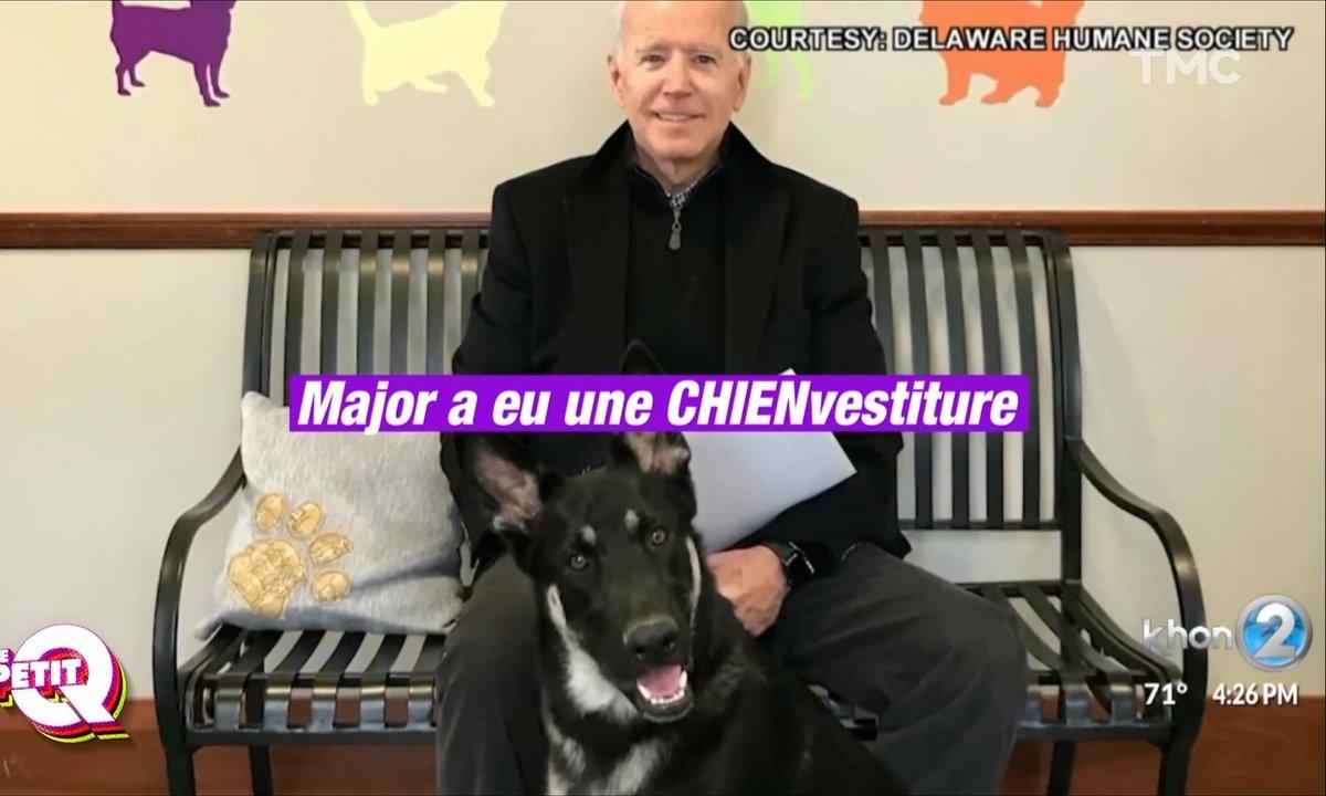 Le Petit Q : l'emménagement des chiens de Joe Biden, parce que oui c'est important