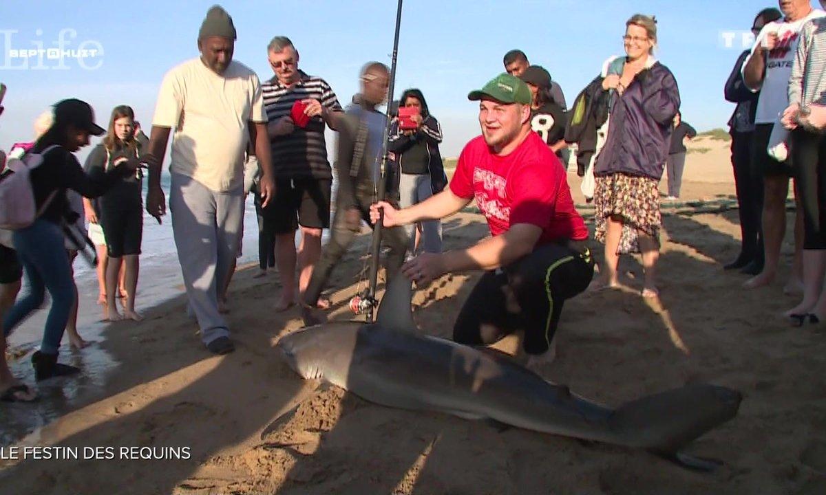 """Le """"sardine run"""" : le festin des prédateurs marins au large des côtes sud-africaines"""