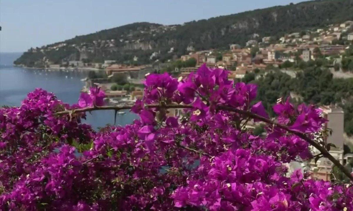 Le spectacle des bougainvilliers en fleur sur la Côte d'Azur