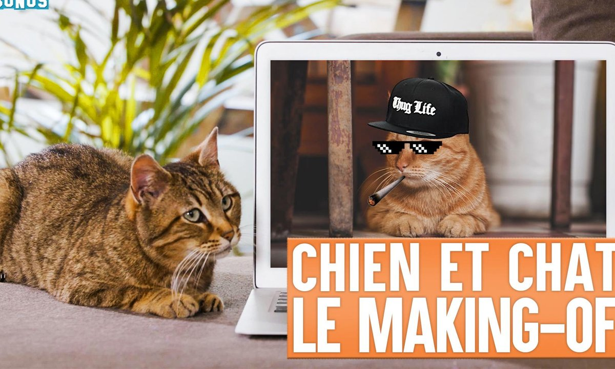 Lolywood - Comme chien et chat - Le Making-of