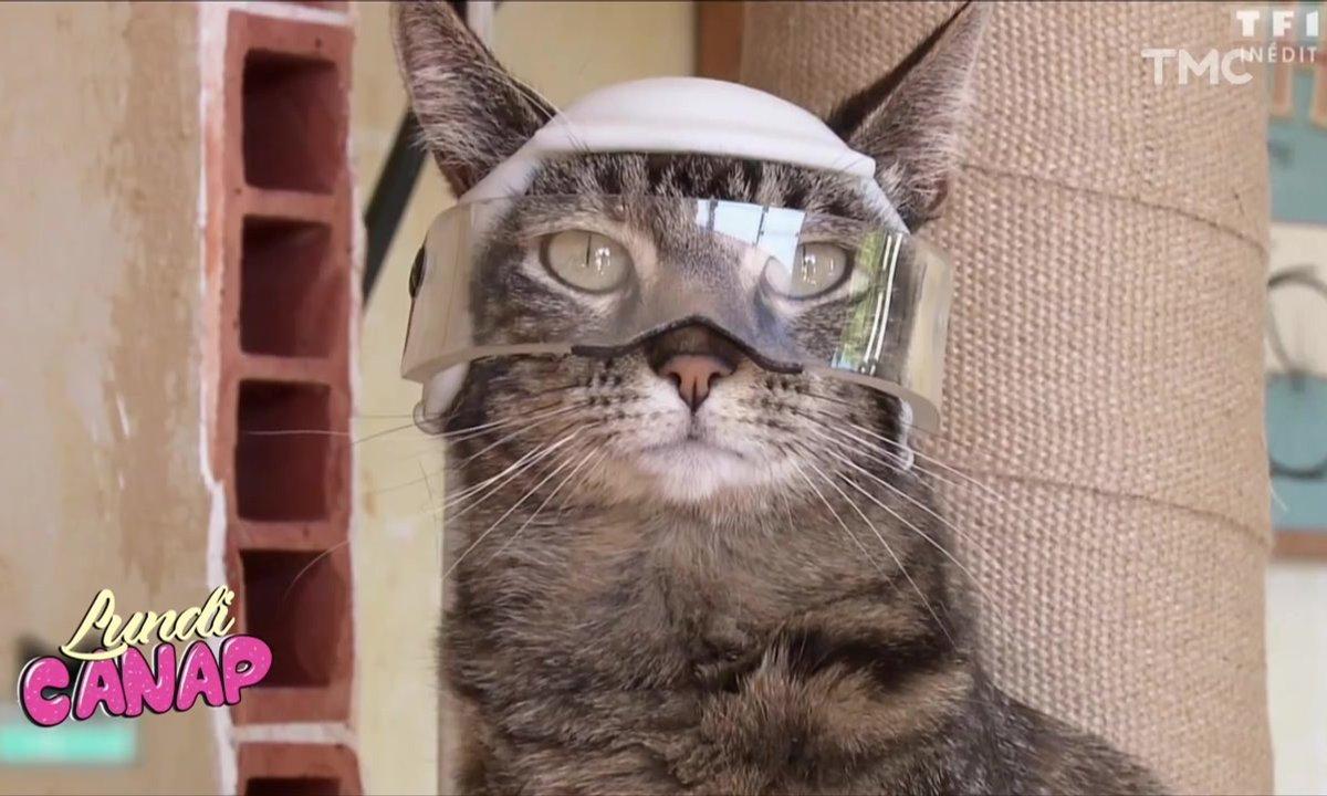 Lundi Canap : la vie secrète des chats
