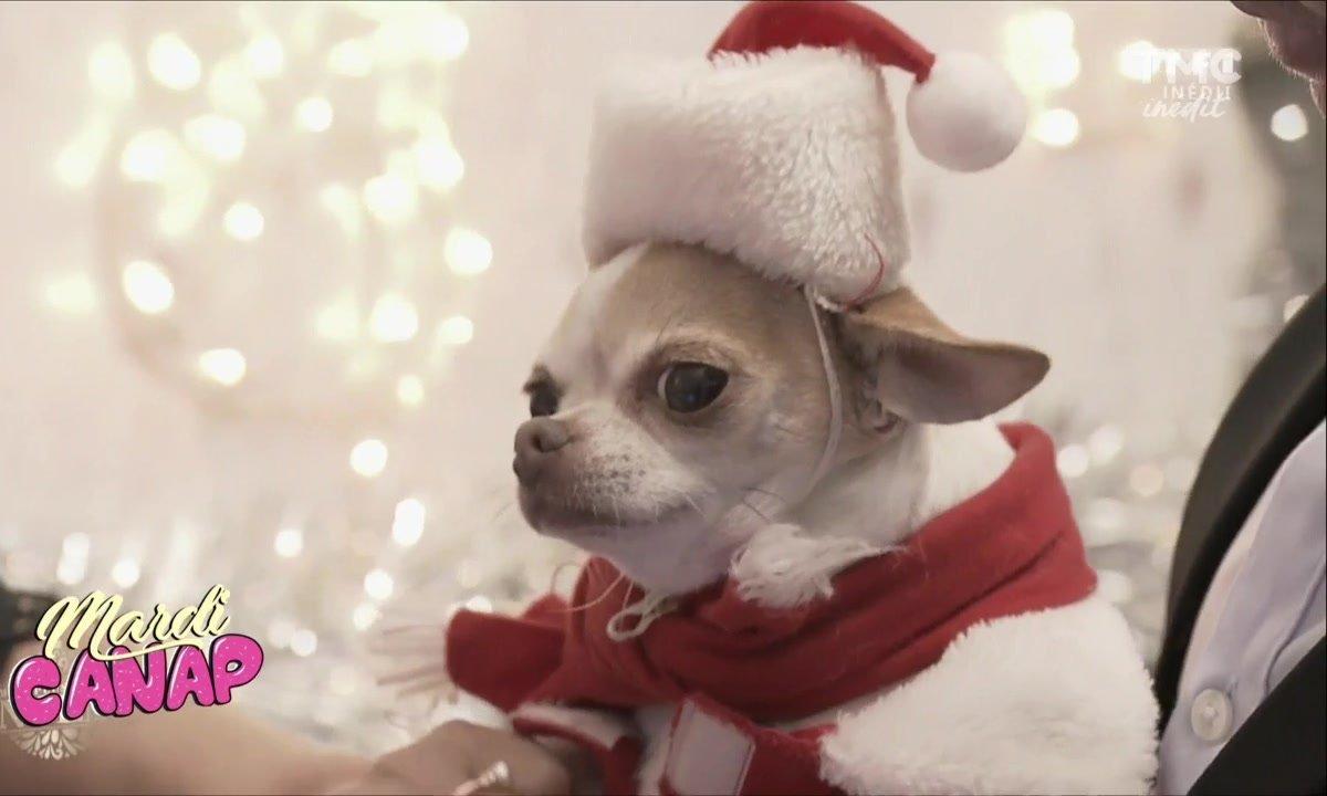 Mardi Canap : C'est déjà Noël !