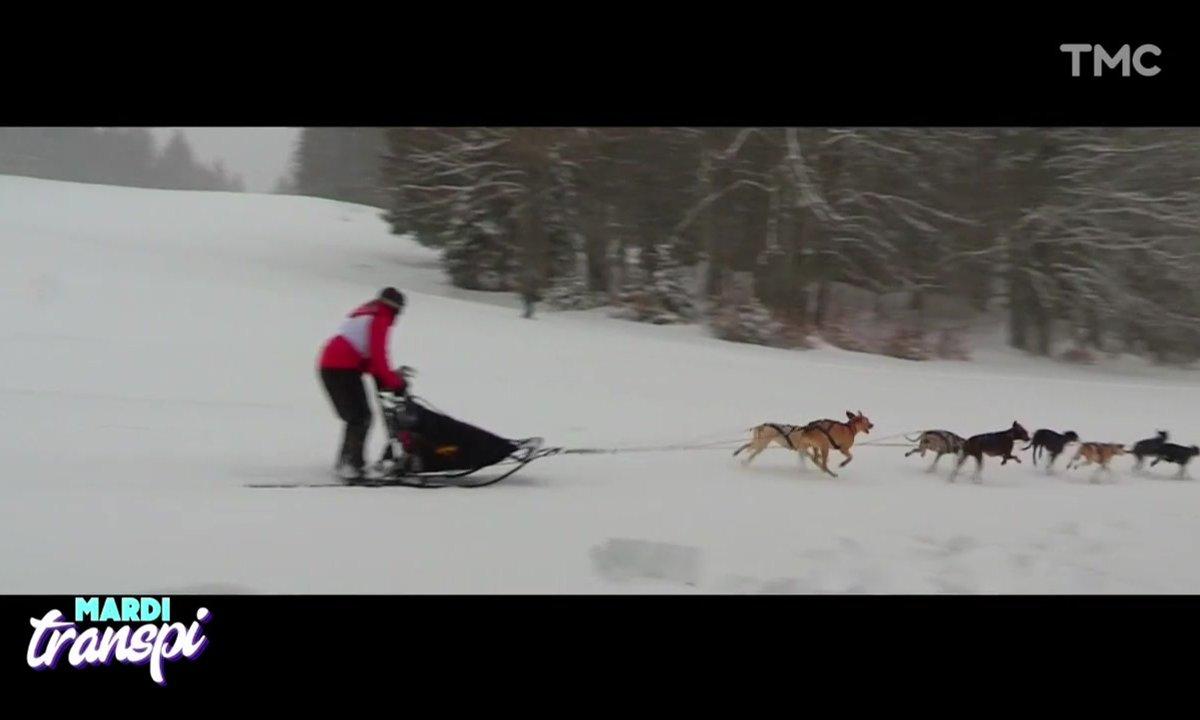Mardi Transpi : la compétition des chiens de traîneaux