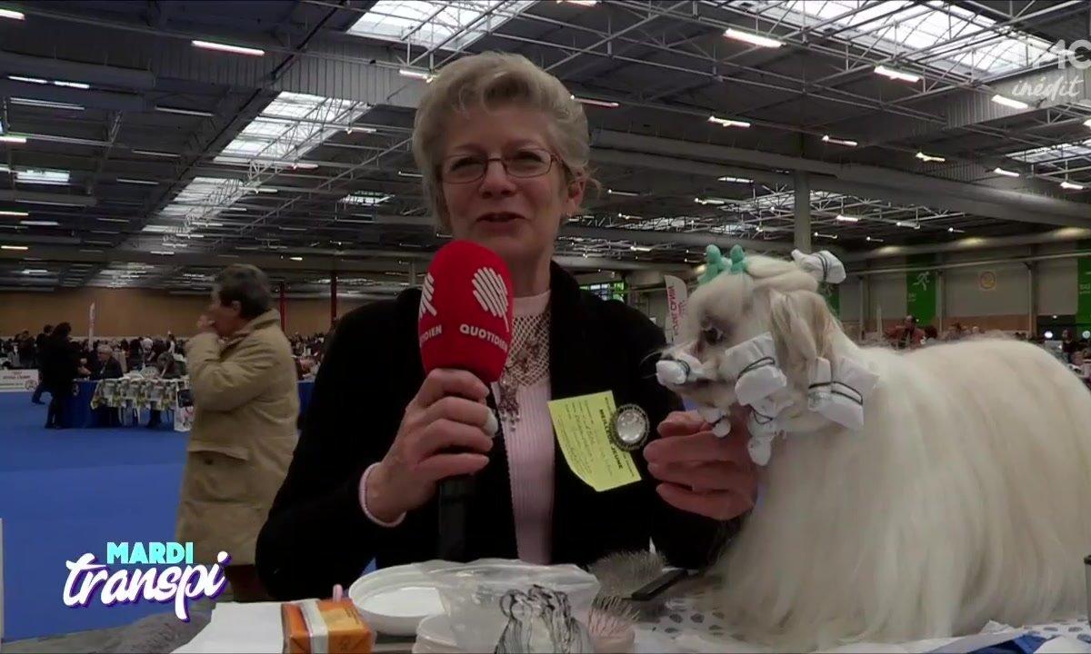 Mardi transpi : Un concours qui a du chien