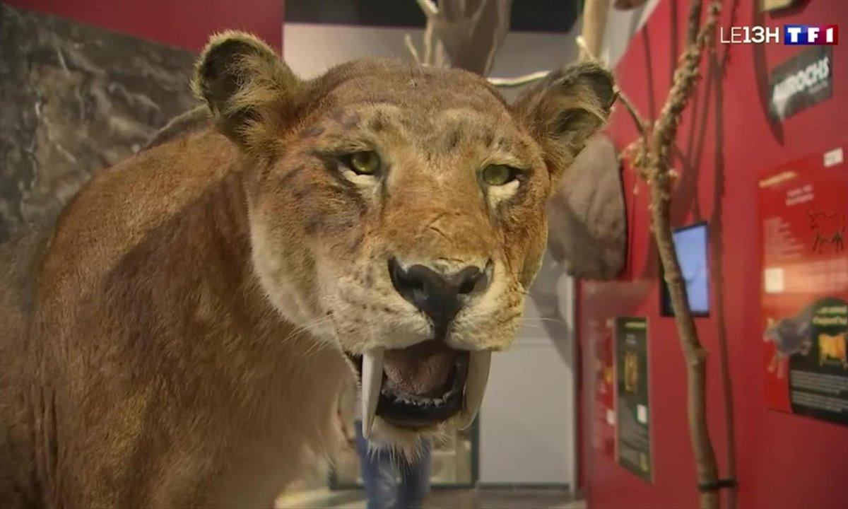 Métiers rares : ce sculpteur d'animaux préhistoriques reçoit des commandes étonnantes