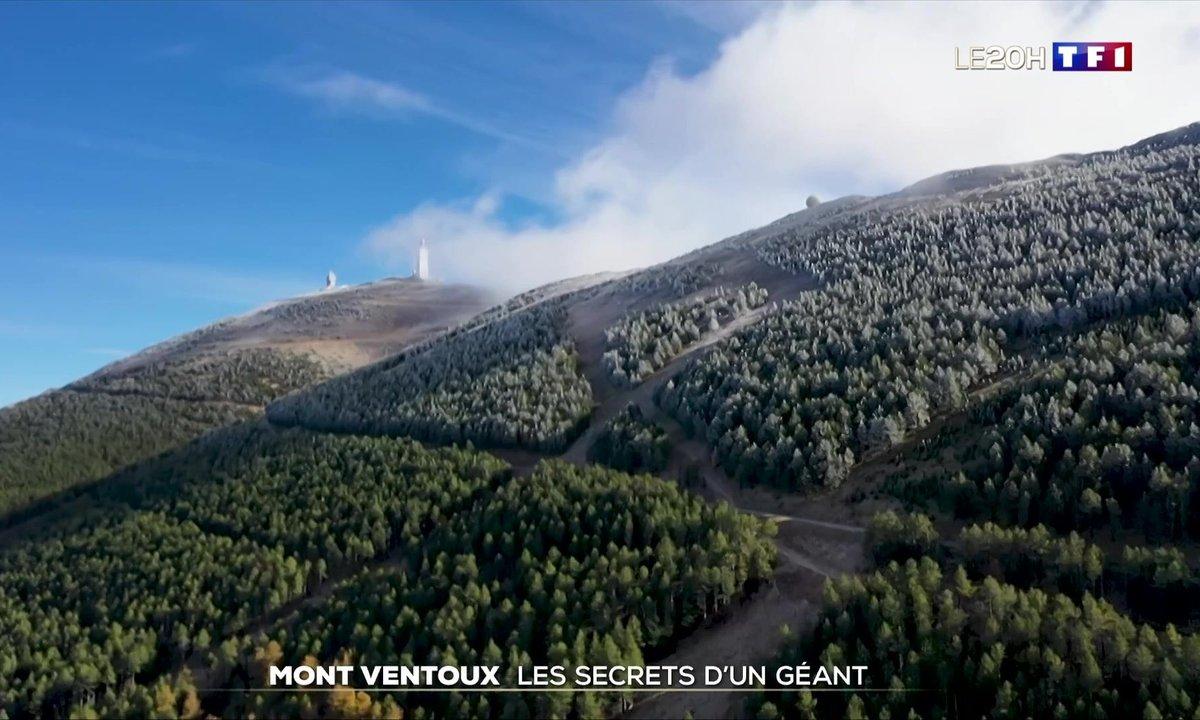 Mont Ventoux, les secrets d'un géant