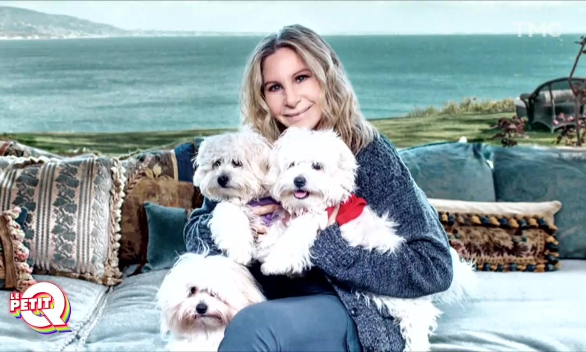 Le Petit Q – le clonage au service (des chiens) de Barbra Streisand
