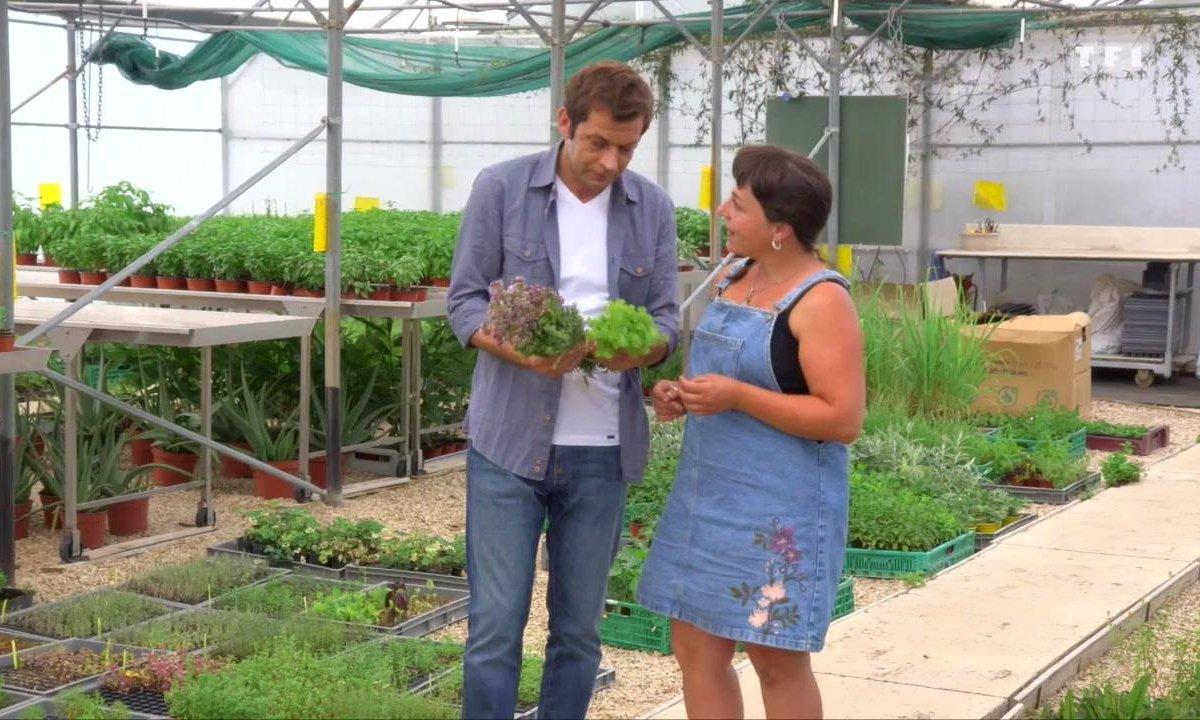 Petits plats en équilibre : sur la route des vacances - Herbes de Provence