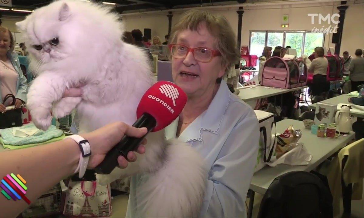 """Poils et grosses babines, """"Animal Expo"""" le salon qui a du chien"""