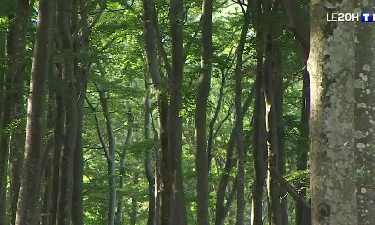 Pyrénées-Orientales : les mystères de la forêt de Massane