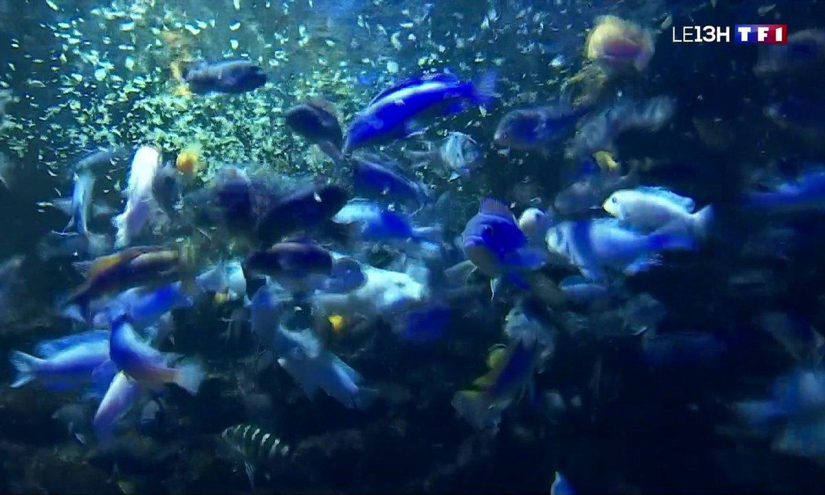Que se passe-t-il dans les aquariums qui restent fermés ?