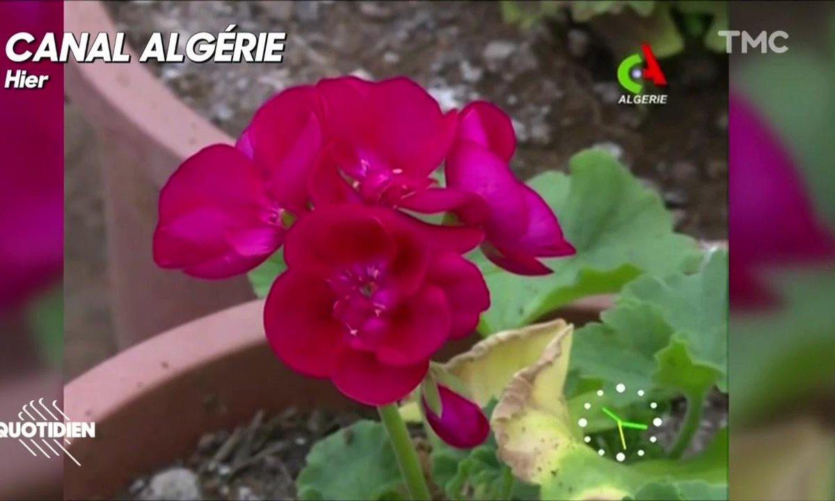 """Canal Algérie, LA chaîne référence en termes de média """"public"""""""