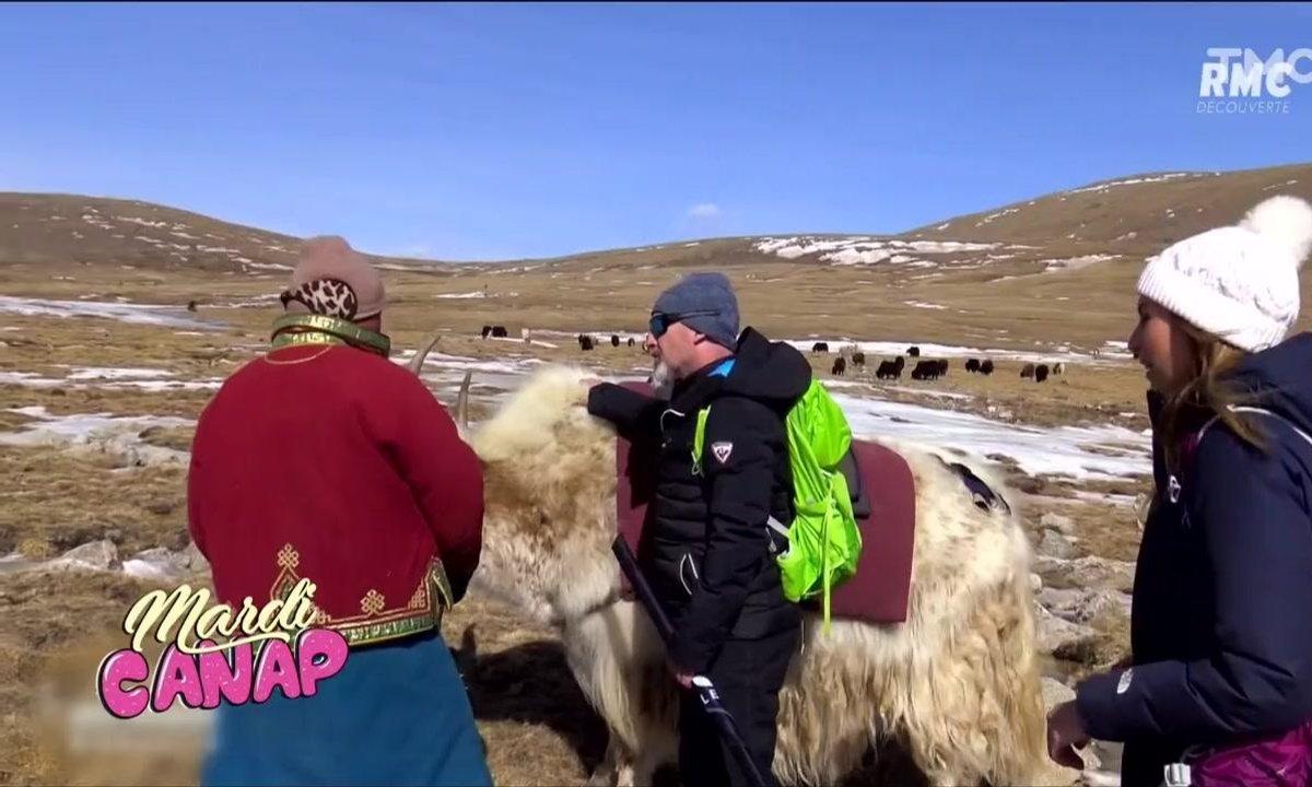 Mardi Canap : un yak, Vincent Lagaf' et Miss France