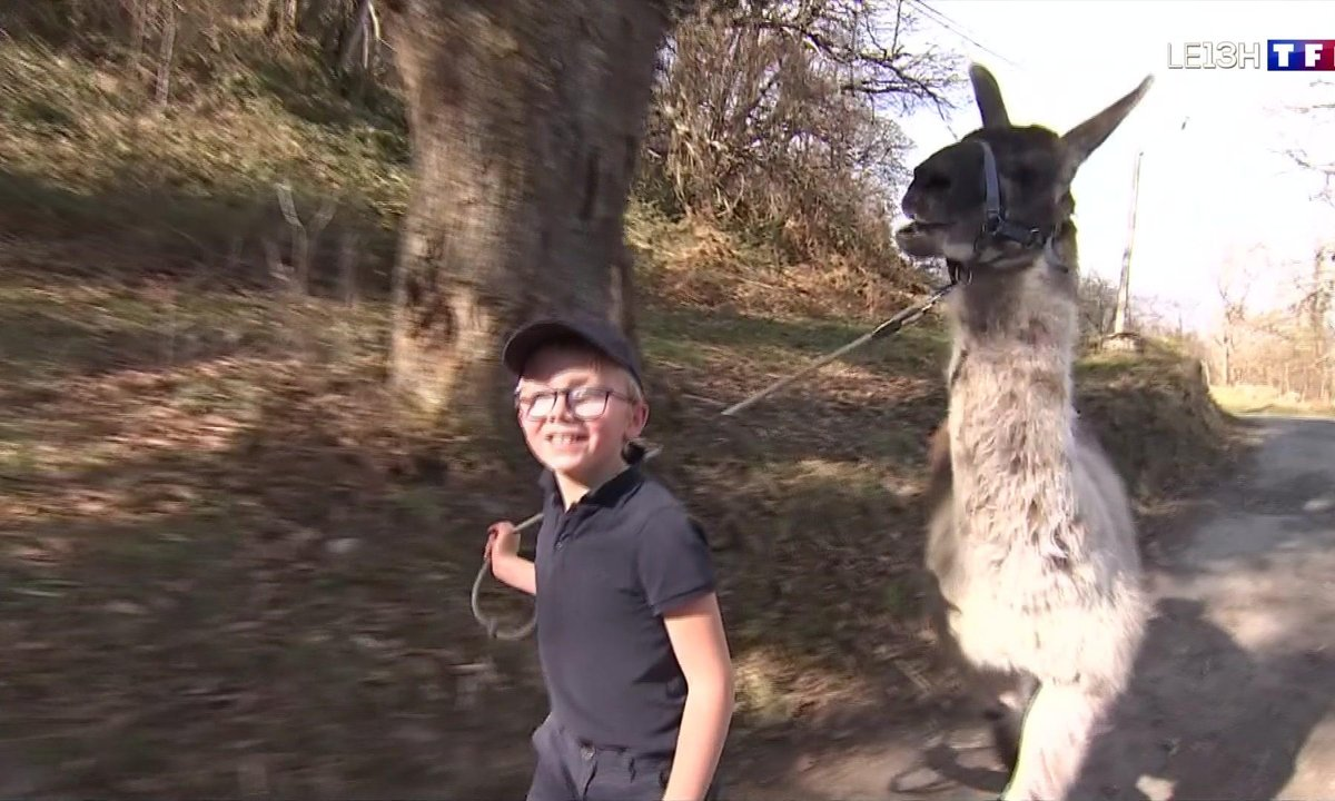 Randonnée avec des lamas dans le cirque de Gavarnie