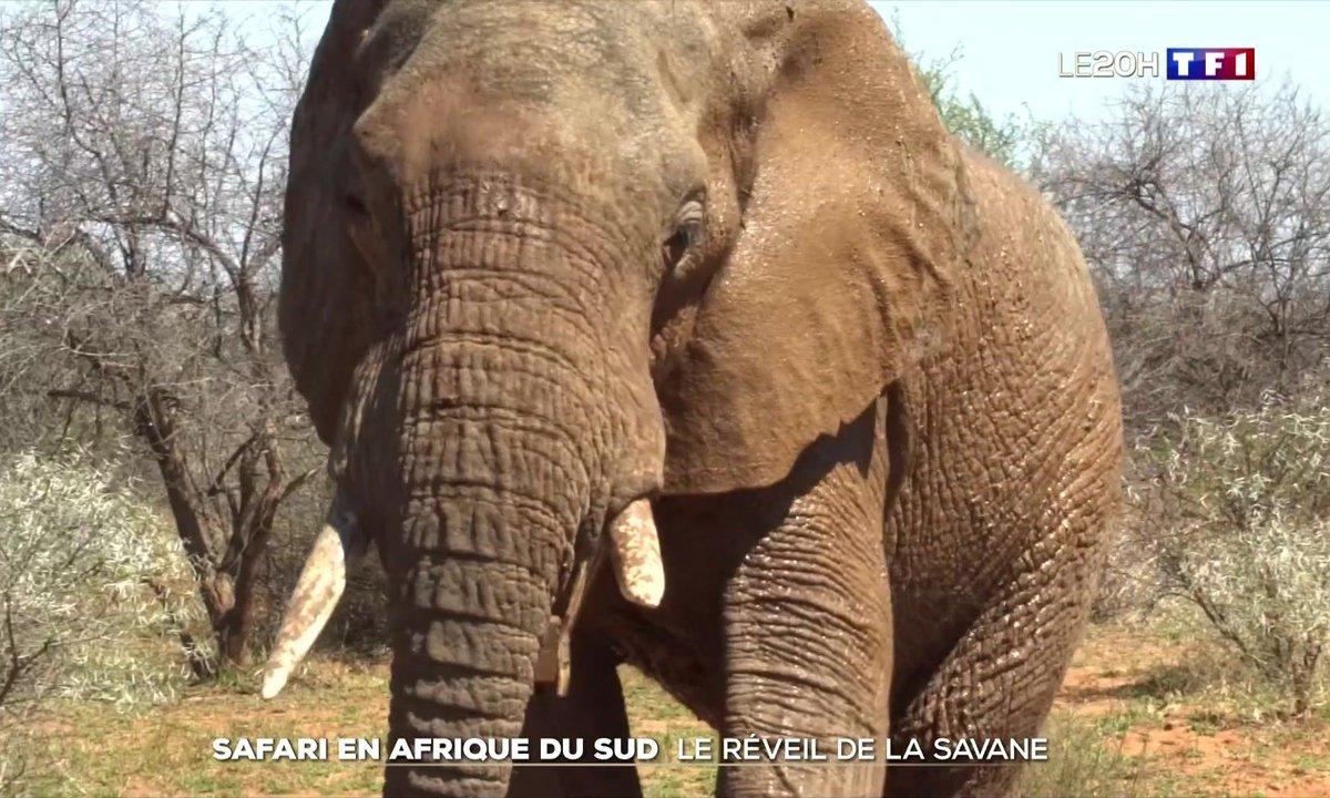 Safari en Afrique du Sud : le réveil de la savane