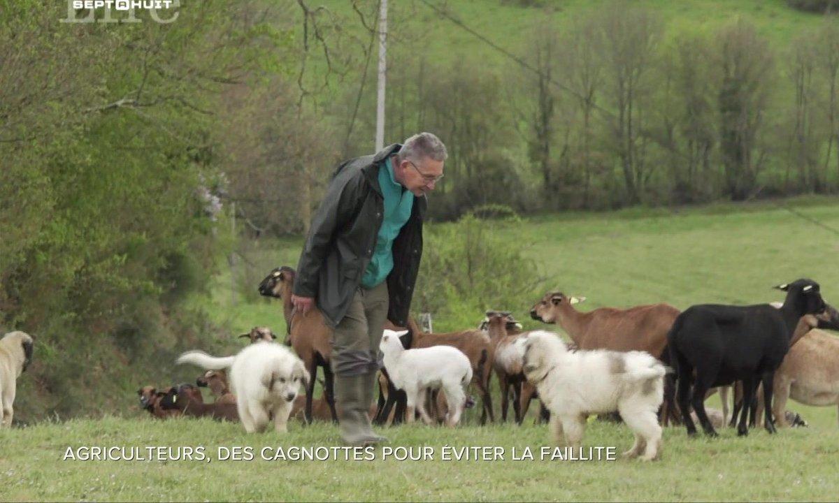 SEPT À HUIT LIFE - Agriculteurs, des cagnottes pour éviter la faillite