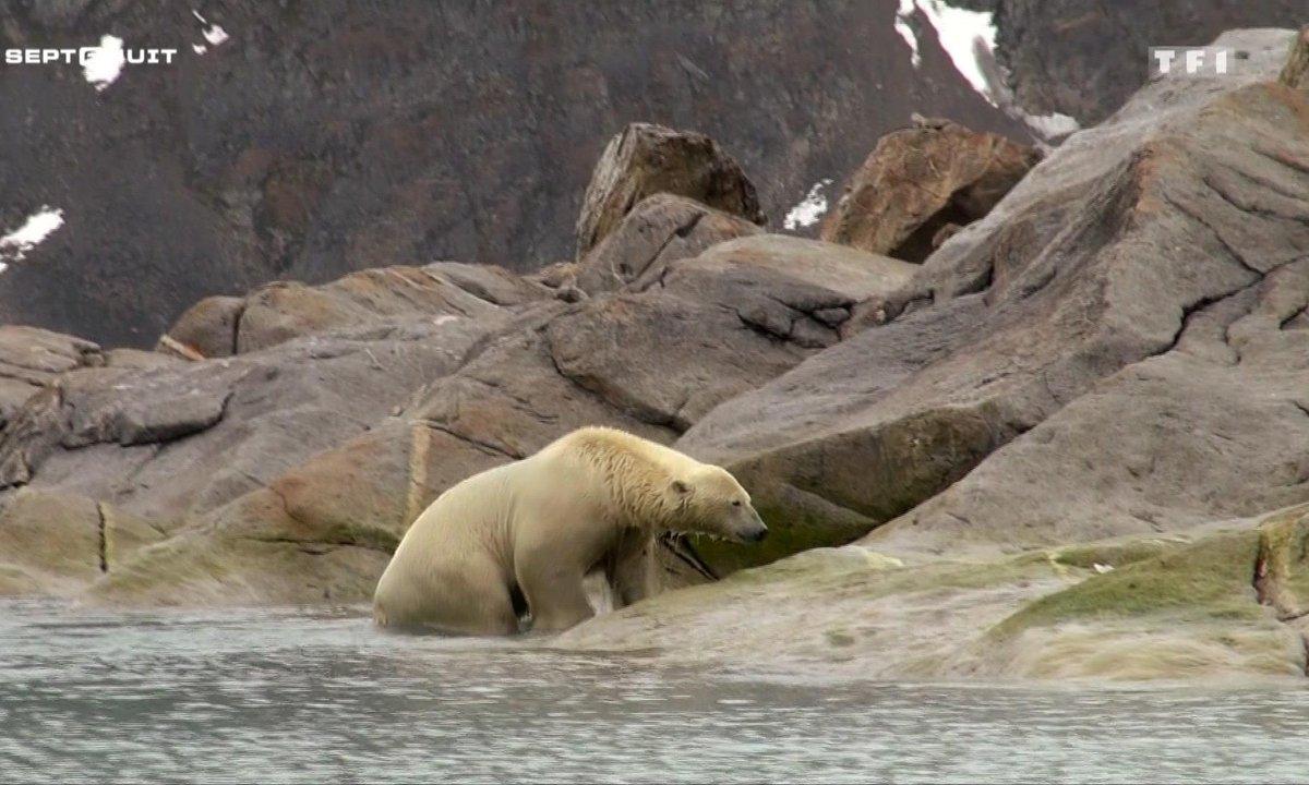 SEPT À HUIT - Au pays de l'ours blanc