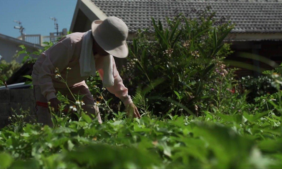 SEPT À HUIT - Les trésors d'Okinawa