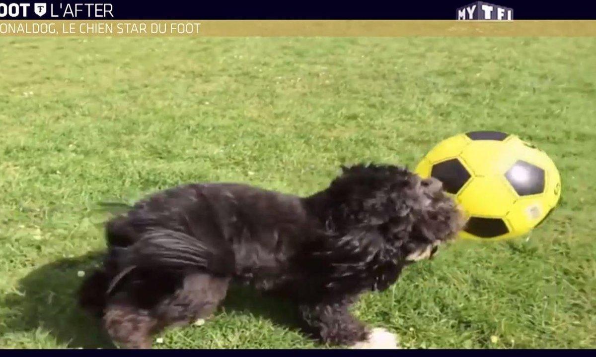 MyTELEFOOT L'After - Le Buzz : Ronaldog, le chien star du foot