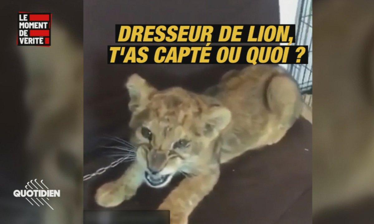 Le Moment de vérité : la mode des lions comme animaux de compagnie