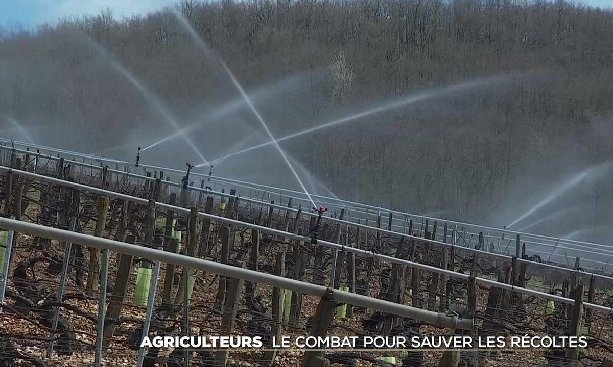 Vague de froid : le combat des agriculteurs pour sauver leur récolte