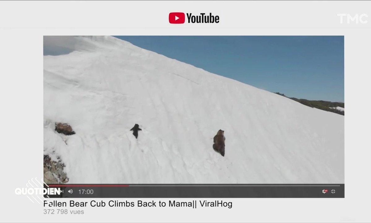 Zoom : l'envers du décor de la vidéo virale de l'ourson