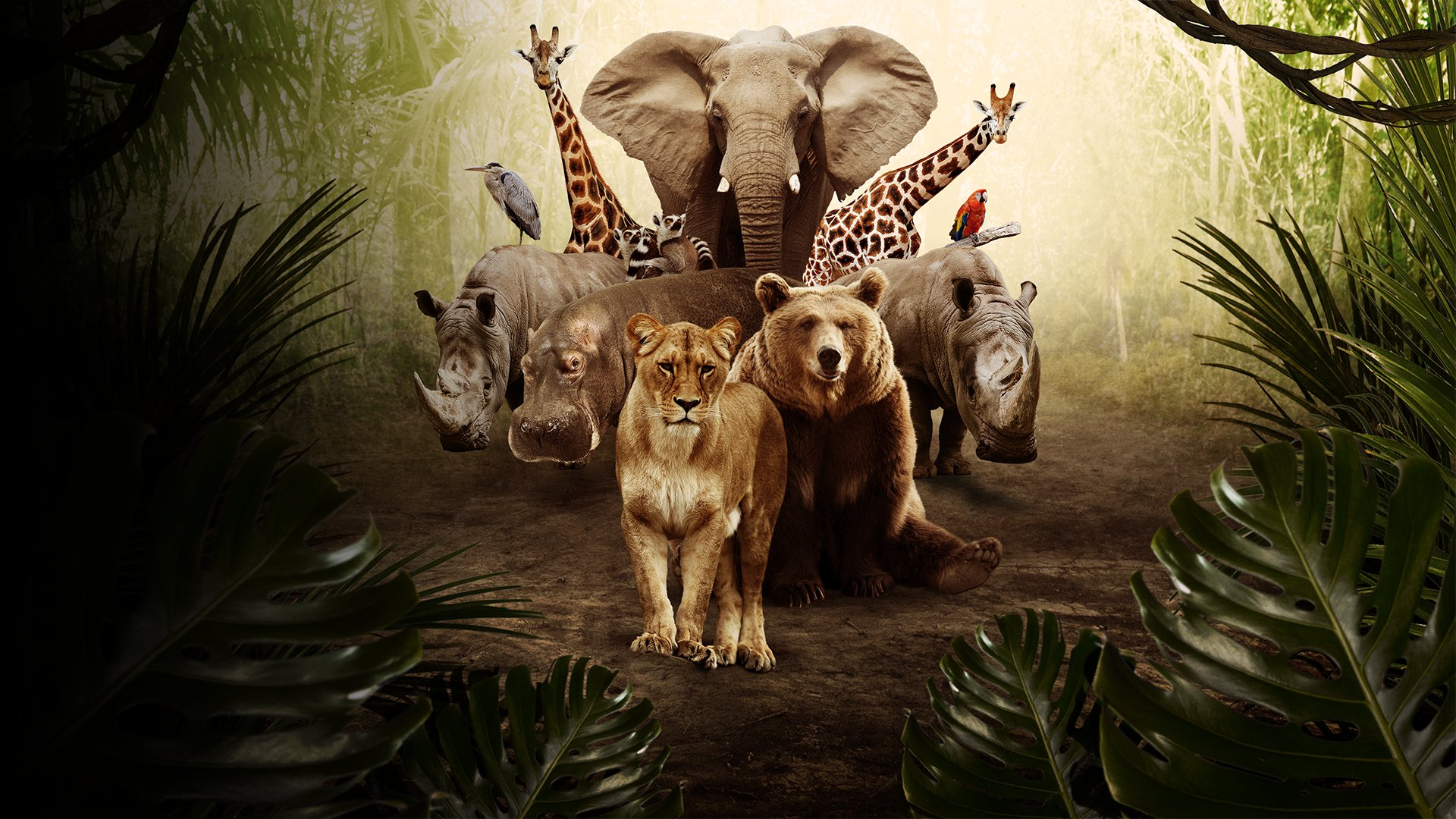 fond Les documentaires Zoo