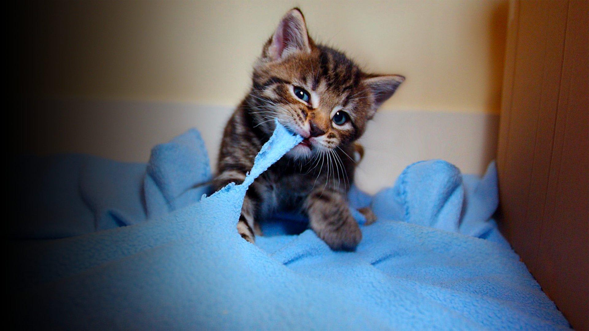 fond Le monde merveilleux des bébés animaux