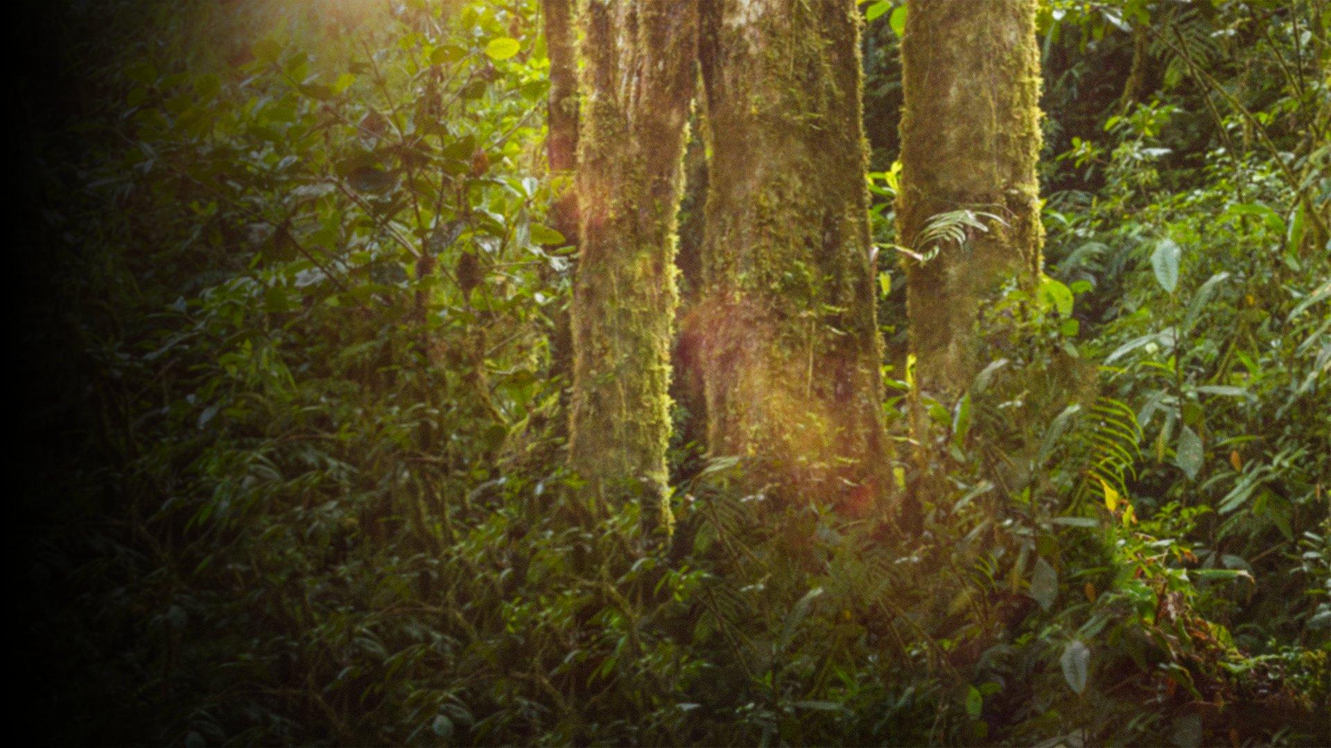 fond Frère des arbres , l'appel d'un chef Papou