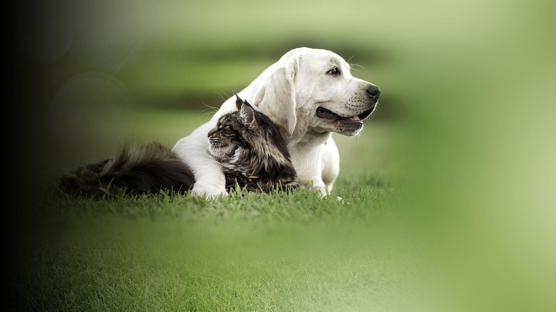 fond Les adieux déchirants d'un maître contraint d'abandonner son chien