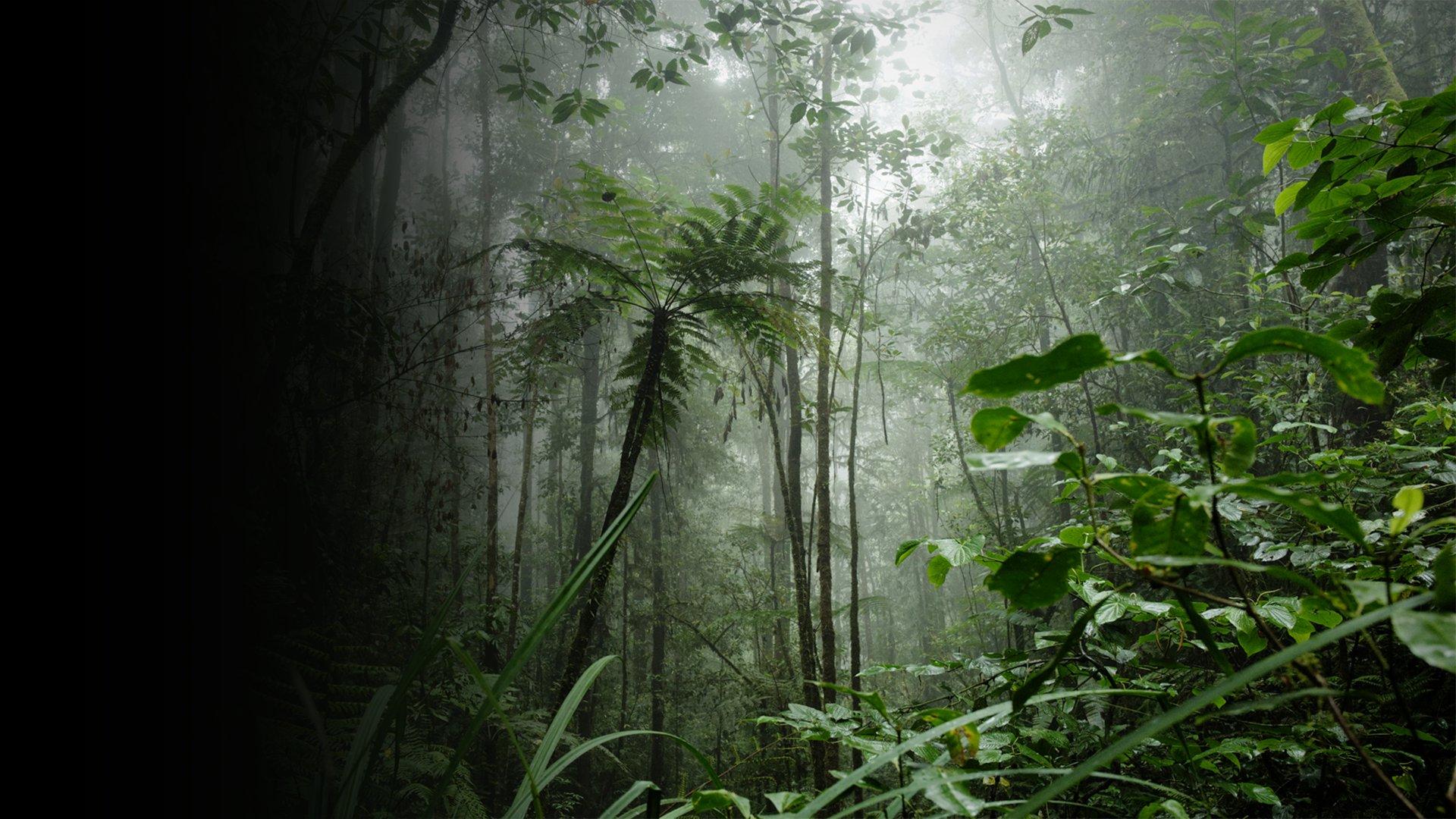 fond Seb en Papouasie : la vraie aventure