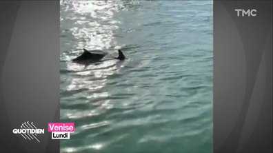 À ce stade, même les dauphins à Venise ne nous font plus rien